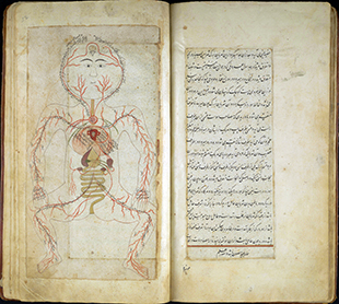 Scan of page of ms. of Mansur b. Ilyas held by History of Medicine Collections at Duke University Libraries